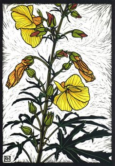 Linocuts by artist Rachel Newling of Australian flowers, Waratah, Gymea  Lily, Banksia, Bottle Brush, Flannel Flower, Kangaroo Paw, .Cooktown  Orchid, Sturt's Desert Pea, Lotus, Waterlily & Native Hibiscus. Linocuts  are for saleas limited edition prints
