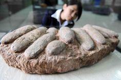 World's largest dinosaur eggs - Technology News - SINA English
