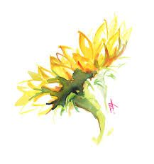 Tattoos on back Watercolor Cards, Watercolor Print, Watercolor Paintings, Watercolours, Watercolor Sunflower, Watercolor Flowers, Watercolor Ideas, Sunflowers And Daisies, Paper Fashion