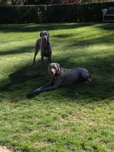 Benson & Fleur after their daily run on 5 acres