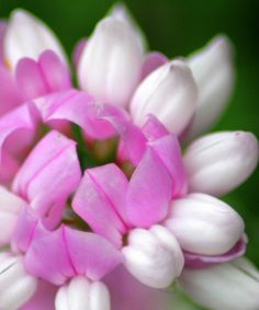 Pink & White Wildflower By Maureen McDonald