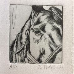 Original Drypoint Hand-pulled Print. 'Horse' inspired by my love of horses £20.00