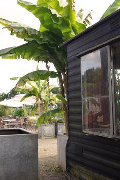 Caravane unter dem Bananenbaum