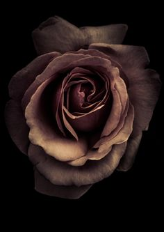 a rose in monochrome by Alan Shapiro on - mi sitio Beautiful Rose Flowers, Exotic Flowers, Amazing Flowers, Fresh Flowers, Sad Wallpaper, Flower Wallpaper, Black Roses Wallpaper, Billy Kidd, Flower Aesthetic