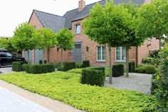 Project MT Lokeren - Verde Garden Architecture - Tailor-made projects Dutch Gardens, Front Gardens, Garden Deco, Garden Park, Umbrella Tree, Low Maintenance Garden, Small Garden Design, Modern Landscaping, Plantation