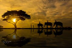 Elephants life in the morning. / 500px
