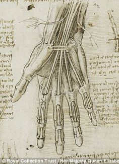 Leonardo da Vinci's depiction of the bones, muscles and tendons of the hand, c.1510-11 http://www.dailymail.co.uk/sciencetech/article-2292206/The-startling-accuracy-Leonardo-da-Vincis-anatomical-sketches-revealed-comparison-modern-medical-scans.html