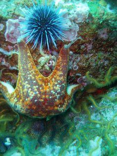 Bat star and Sea urchin