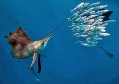 Caleta de cara al mar: IMÁGENES FONDO DEL MAR