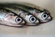 They say it takes a sprat to catch a mackerel ... So these glistening anchovies should have been safe