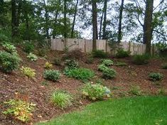 Slopes and their integration in landscape design Landscaping A Slope, Permaculture, Botanical Gardens, Stepping Stones, Landscape Design, Backyard, Outdoor Decor, Plants, Image