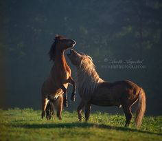 Playful Morning by Anette Augestad