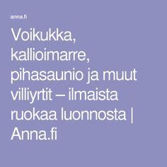 Voikukka, kallioimarre, pihasaunio ja muut villiyrtit – ilmaista ruokaa luonnosta | Anna.fi