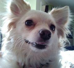 Elphie dog : smiley girl