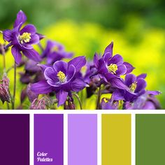 In Color Balance Purple Columbine Spring Flowers Color Palette Colour Pallette, Colour Schemes, Color Combos, Purple Color Palettes, Colours That Go Together, Color Harmony, In Color Balance, Design Seeds, Colour Board
