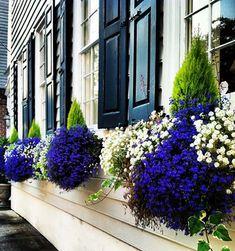 Цветы в саду и на даче - самый простой способ создать цветущий сад за окном. Вот оно, мое летнее настроение! | Красивый Дом и Сад