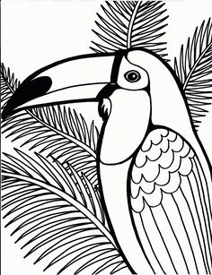 Toucan Coloring Page For Kids And Adults From Birds Pages