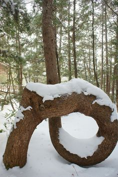 A Strange Tree In Winter