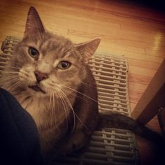 """Pet me. Now."""