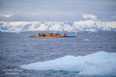 Incredible Wildlife Encounter At Cierva Cove, Antarctica