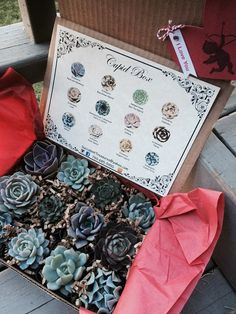Let Love Grow with Succulent Treasures Cupid Box. A Dozen Assorted Premium succulents. The Original Box The perfect unique living gift! Our