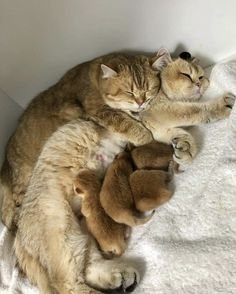 Cute Family, Beautiful Family, Happy Family, Beautiful Cats, Image Chat, Love Dogs, Cute Cats And Kittens, Images Gif, Beautiful Creatures