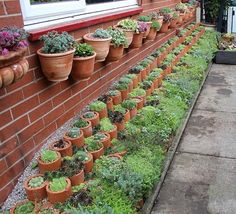 """5 Easy steps to achieve a """"WOW"""" garden feature: Alpine Walls using Cla – Grow Your Ideas"""