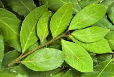 vavřín Bay Leaves, Plant Leaves, Korn, Spices, Herbs, Plants, How To Make, Blog, Food Photography