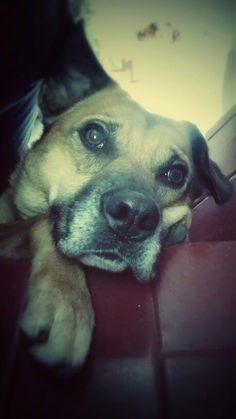 My little dog