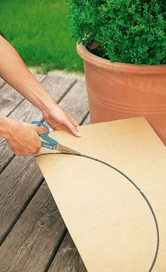 How to trim decorative shrubs by giving them special shapes – Practical ideas Boxwood Garden, Topiary Garden, Back Gardens, Outdoor Gardens, Garden Projects, Garden Tools, Box Wood Shrub, Pinterest Garden, Garden Deco