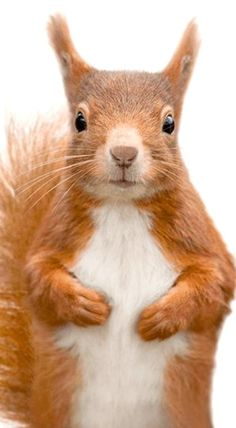 Are you still pinning squirrels?