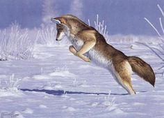 """Mousin Around"" - mansanarez Wildlife Art by Tom Mansanarez, limited edition prints featuring elk, deer, antelope, moose, cats, cougar, mountain lion, hounds, horses, and bobcats. - Limited Edition Prints"