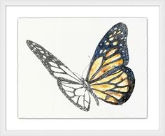 With a deckled edge, this artistic sketch of a monarch butterfly is unfinished in pen and ink with washes of watercolor. Floating on a mat and framed in white, this striking specimen adds an artistic flair to any space.