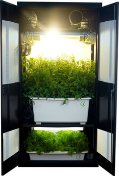 Weed Closet Grow Box I really like this system. It is an awesome piece of furniture to have in your house. A super grow box can save you thousands of dollars. Have a look and be amazed by its sheer brilliance.