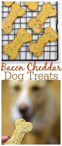DIY Pet Recipes For Treats and Food - Bacon Cheddar Homemade Dog Treats - Dogs, Cats and Puppies Will Love These Homemade Products and Healthy Recipe Ideas - Peanut Butter, Gluten Free, Grain Free - How To Make Home made Dog and Cat Food - diyjoy.c #easydogtricks