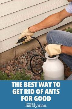 Put an end to most ant problems with inexpensive products from the home center or hardware store, and save the expense of hiring an exterminator. Get Rid Of Flies, Get Rid Of Ants, Ant Spray, Mice Repellent, Ant Problem, Wood Repair, Lawn Maintenance, Diy Home Repair, Home Defense