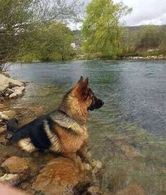 What a beautiful day! #gsd #water #cute