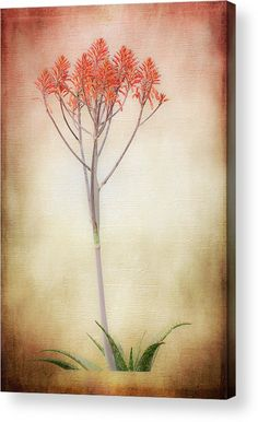 Flowering Aloe Acrylic Print by Debra Martz.  All acrylic prints are professionally printed, packaged, and shipped within 3 - 4 business days and delivered ready-to-hang on your wall. Choose from multiple sizes and mounting options.