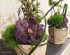 Orchidee Wanda in Rinde