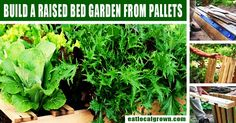 Here's a great way to get started growing your vegetables this year!All you really need to do a little pallet gardening is a wood pallet, some good soil and a few seeds...