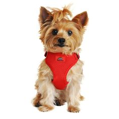 American River Wrap & Snap Dog Harness
