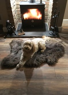 Happy customer Helen says 'We love the brown sheepskin rug we bought from you and so does our dog Saffi'. Looks like Saffi has bagged a great spot there in front of that lovely wood burner! Wood Burner, Sheepskin Rug, Stuff To Do, Annie, Fans, Dining Room, Brown, Happy, Animals