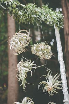 suspended air plants, photo by Evynn LeValley http://ruffledblog.com/henry-miller-library-wedding #backdrops #ceremony