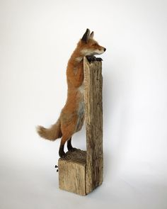 My largest fox sculpture so far, measuring 18 inches tall, including his base 🦊🧡. Needle Felted Animals, Felt Animals, Needle Felting, Wool Felting, Felt Fox, British Wildlife, Cute Mouse, Handmade Felt, Soft Sculpture