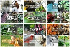 Monthly garden task lists to keep your garden in top shape.
