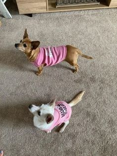 """Peppa & Tilly are showing off their new shirts from Doggie Diva!  I ordered these to be sent as a surprise, and Doggie Diva made sure that I ordered the correct sizes and even included a note so they'd know who was sending them these a..."" - Colleen B. Dog Boutique, Dog Shirt, Pet Products, Cute Shirts, Cute Dogs, Pup, Diva, Corgi, Sisters"