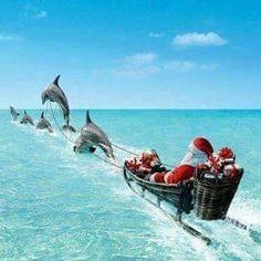 Dolphin sleigh