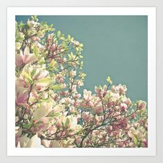 Magnolia in Bloom Art Print by Cassia Beck - $20.80