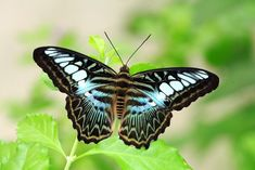 Tours of the Merlin Butterfly Sanctuary are available every Monday, Wednesday and Fridays at am. Children and adults can learn about the butterfly life-cycle and see many species. Family Friendly Resorts, Butterfly Life Cycle, Phuket, Resort Spa, Merlin, Wednesday, Tours, Children, Beach