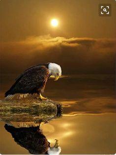 "HANNU on Twitter: ""eagle sunset"""